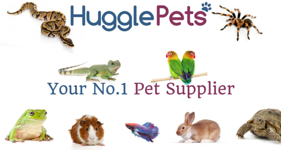 About HugglePets Homepage