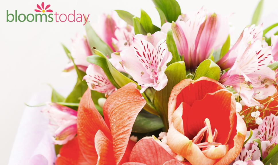 BloomsToday about us