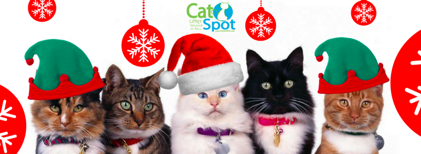About CatSpot Homepage