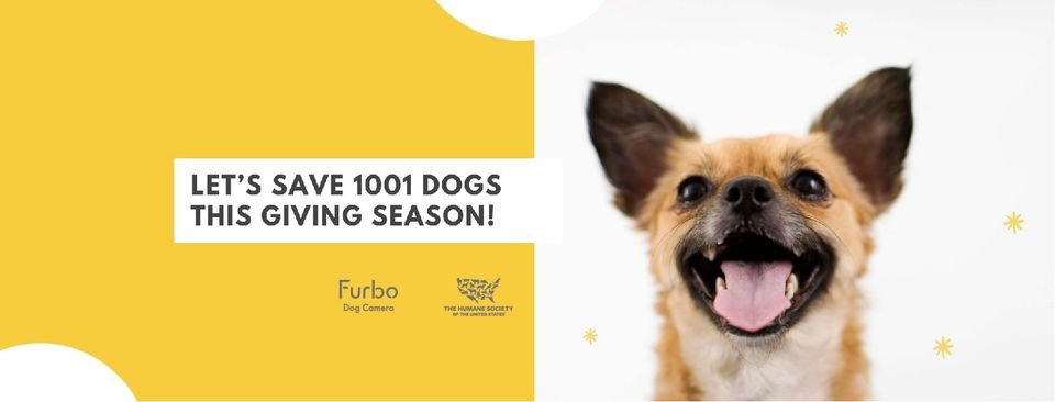 About Furbo Dog Camera Homepage