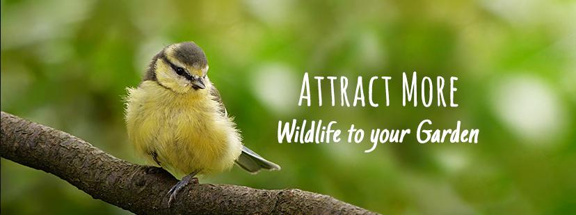 About CJ Wildlife Homepage