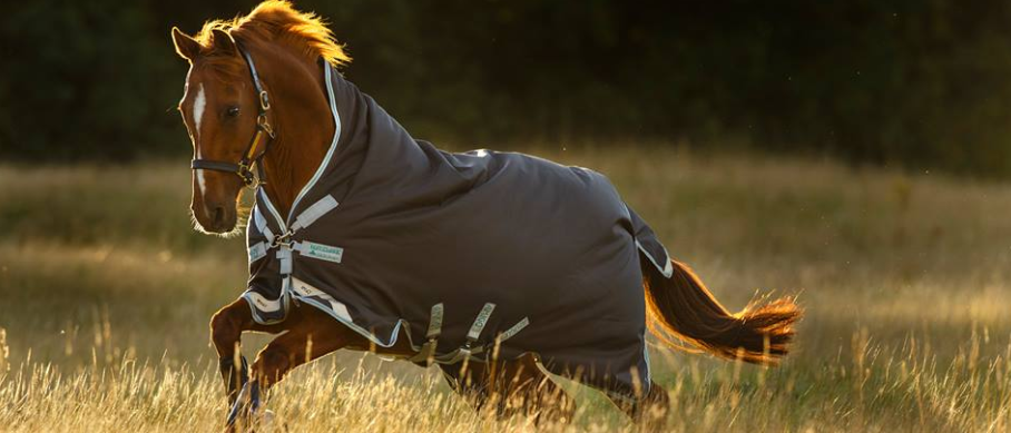About Equine Superstore Homepage