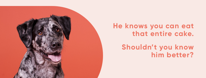 About Embark Homepage
