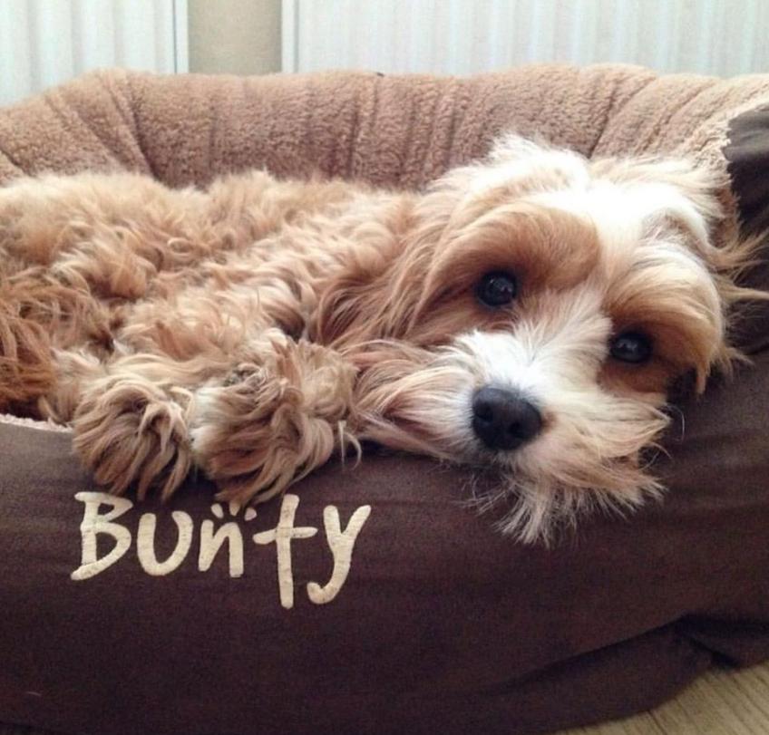 Bunty Homepage