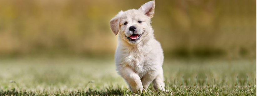 About PetCareSupplies Homepage
