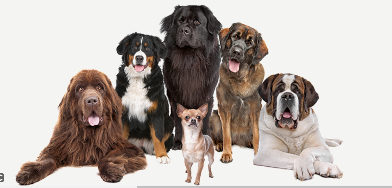 About BEST DEAL PET SUPPLY Homepage