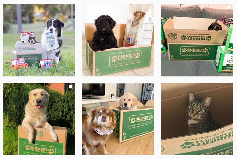 Budget Pet Products Instagram