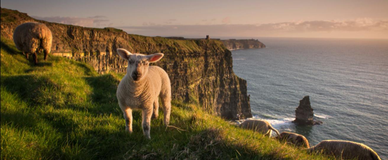 Imagine Ireland About