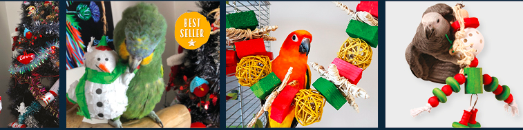 About Northern Parrot Homepage