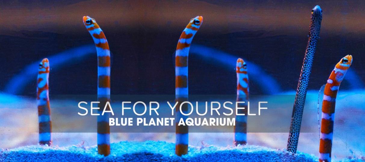 About Blue Planet Aquarium Homepage
