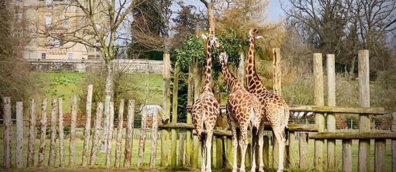 About Blair Drummond Safari Park